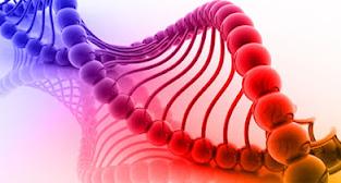 Test nutrigenético para diseñar dietas personalizadas
