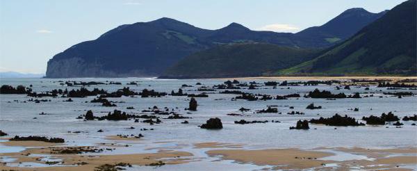 Un estudio del CITICAN proyecta luz sobre nuevas algas comestibles en la costa de Cantabria